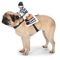 Show Jockey Saddle Dog Costume | BaxterBoo