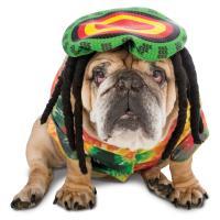 Zelda 70's Rasta Halloween Dog Costume | BaxterBoo