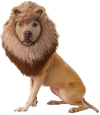 Animal Planet Lion Dog Costume | BuyCostumes.com