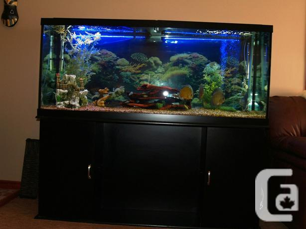 Aquarium for sale bc large aquariums for sale for Tall fish tanks for sale