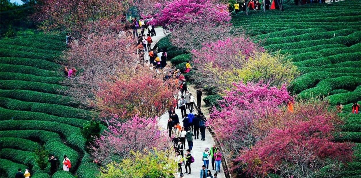 El increíble espectáculo de las flores de cerezo en China - 22/03