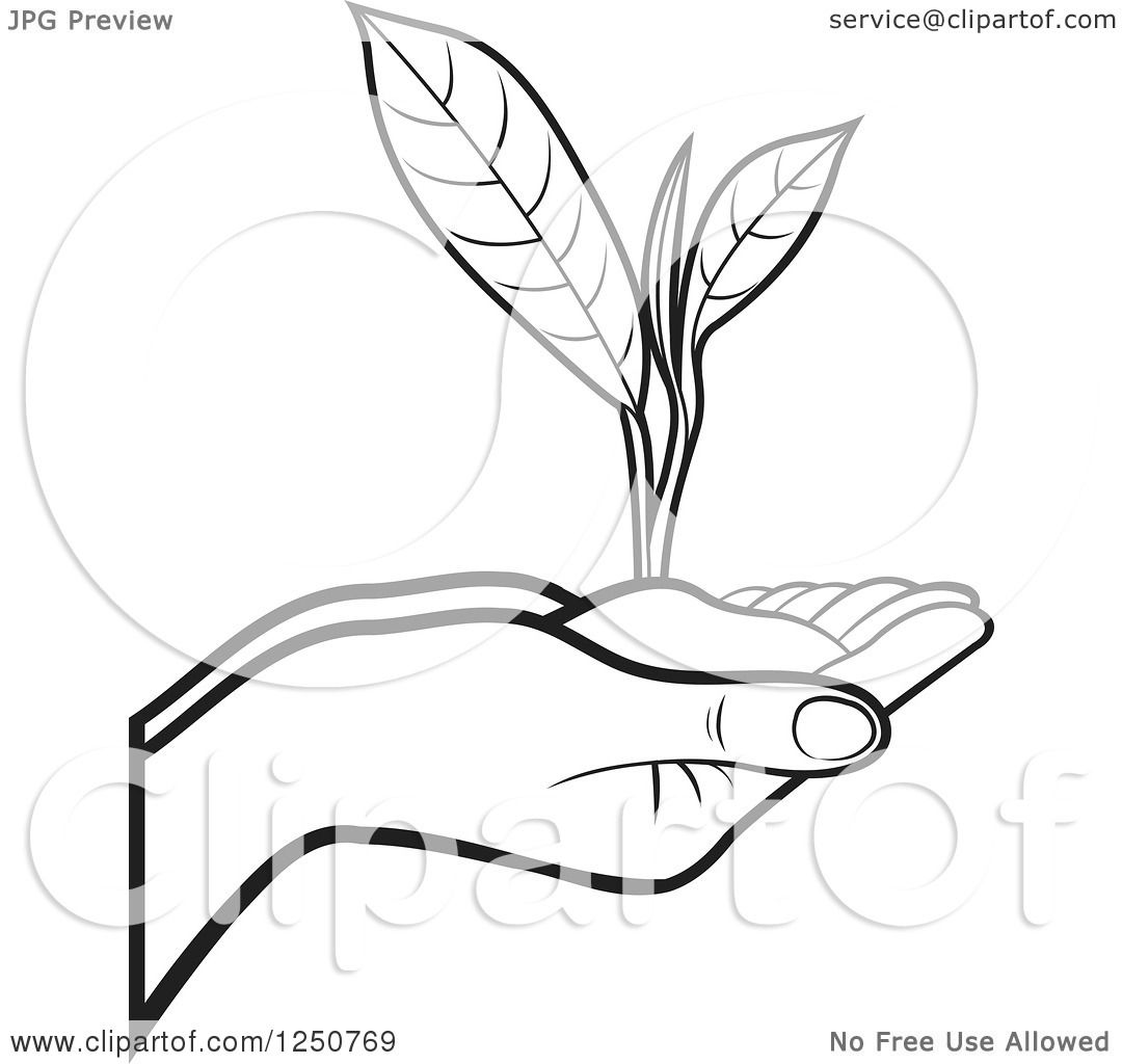 Clipart Of Black And White Hands Holding A Tea Leaf Plant