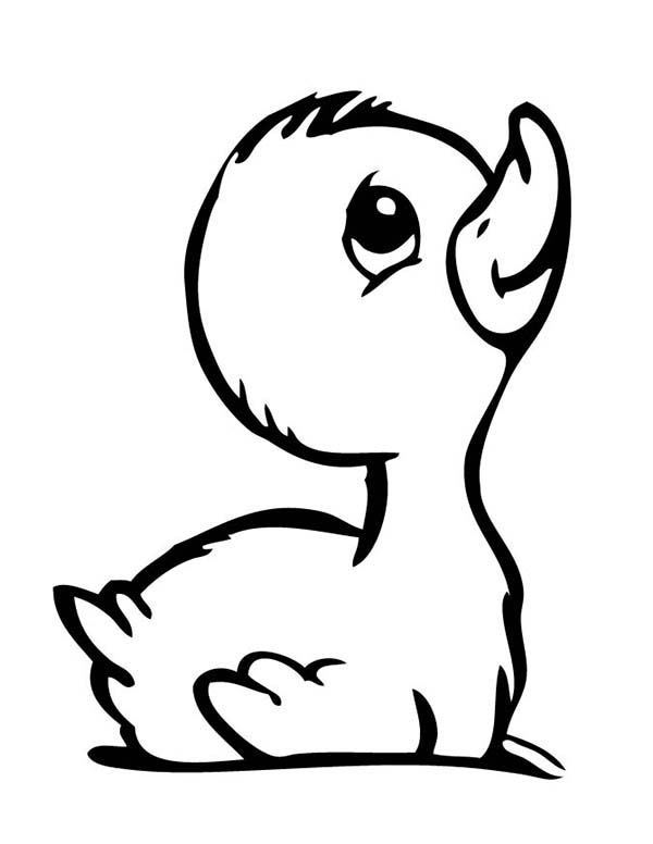 Cute Duckling Wallpaper Free Coloring Pages Of Duck Drawing