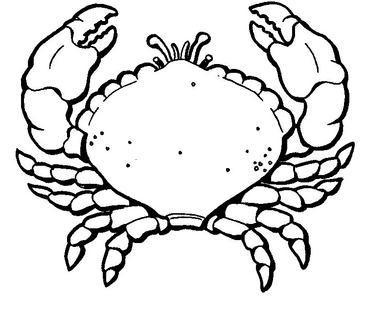 hermit crab coloring page auto electrical wiring diagramhermit crab coloring page