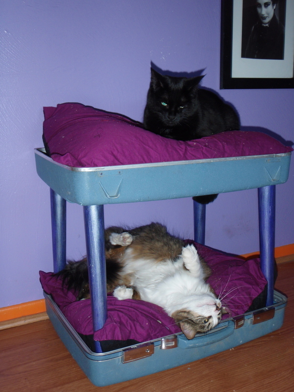 Cat Beds And Furniture Reclaimed Suitcase And Chair Cat Bunkbed How To Make A Pet