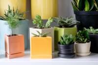 Office Cubicle Plants Small Desk Plants Office Stupendous ...