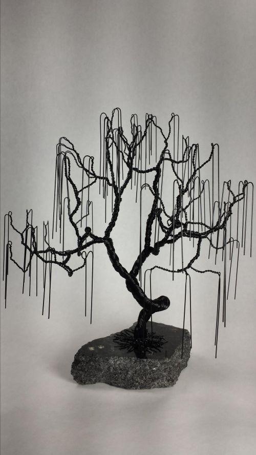 Medium Of Weeping Willow Bonsai