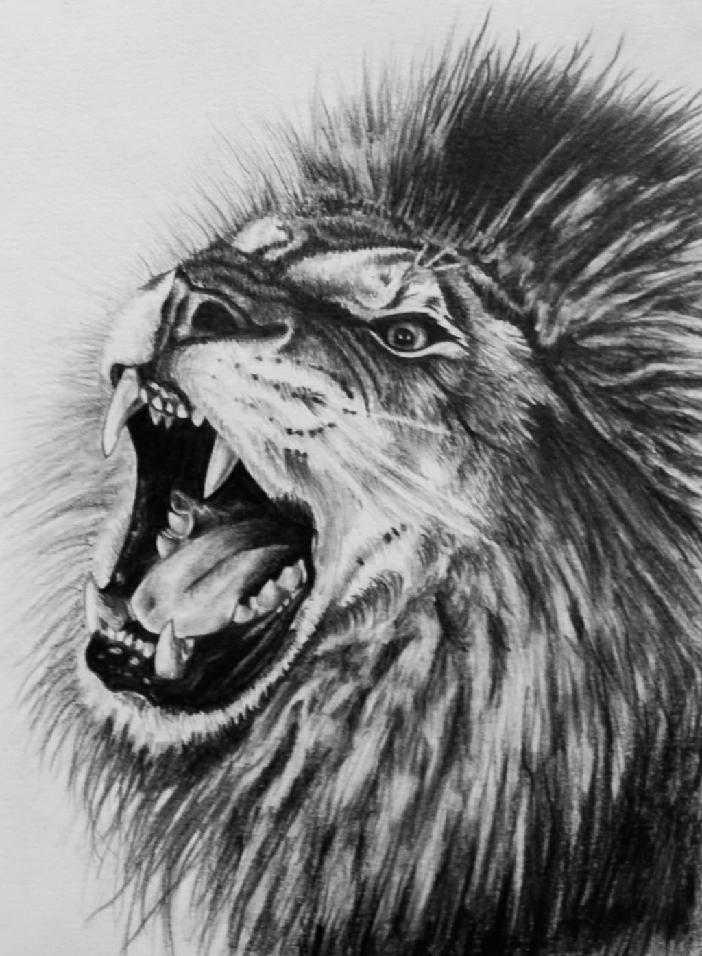 Animal Print Wallpaper For Walls 19 Lion Drawing Art Ideas Sketches Design Trends