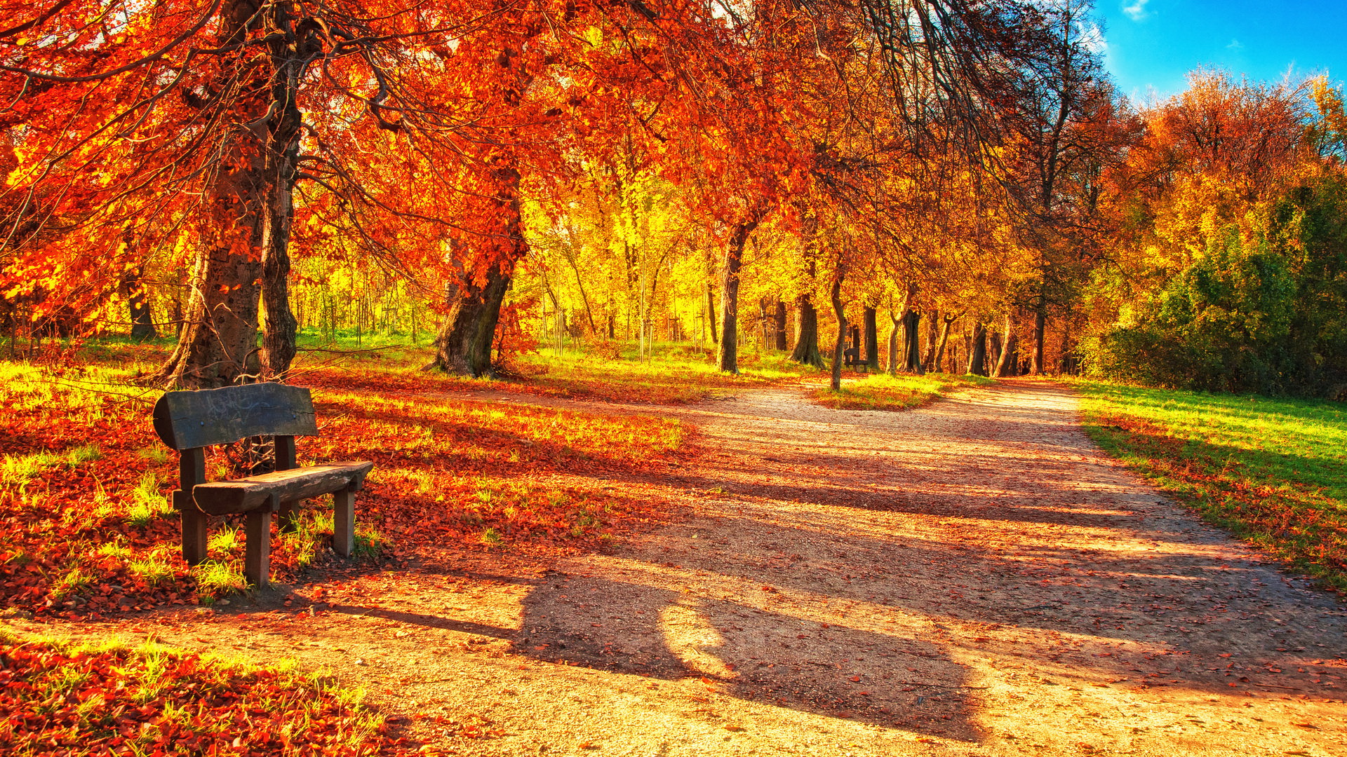 Falling Leaves Wallpaper Screensavers 25 Fall Wallpapers Backgrounds Images Pictures