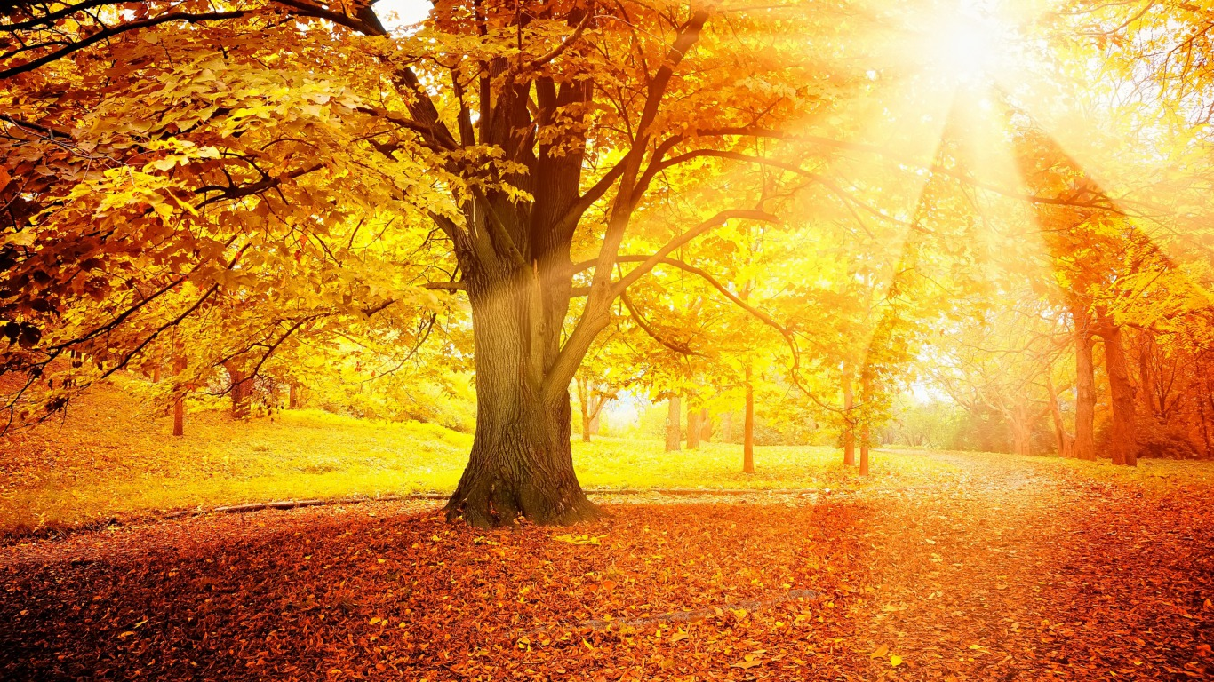Awesome Fall Wallpapers 30 Sunrays Wallpapers Backgrounds Images Design