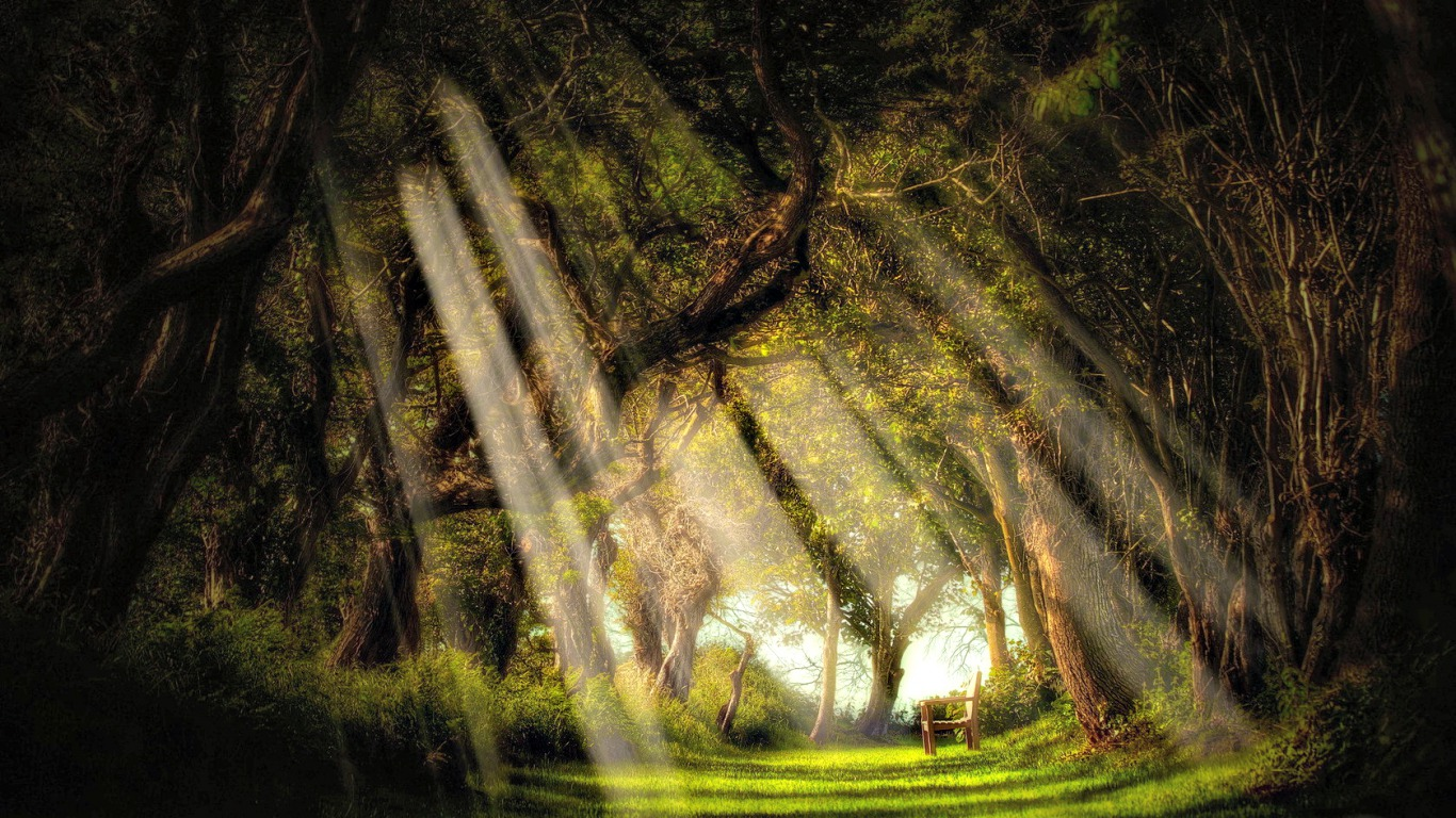 Forest Animated Wallpaper 30 Sunrays Wallpapers Backgrounds Images Design
