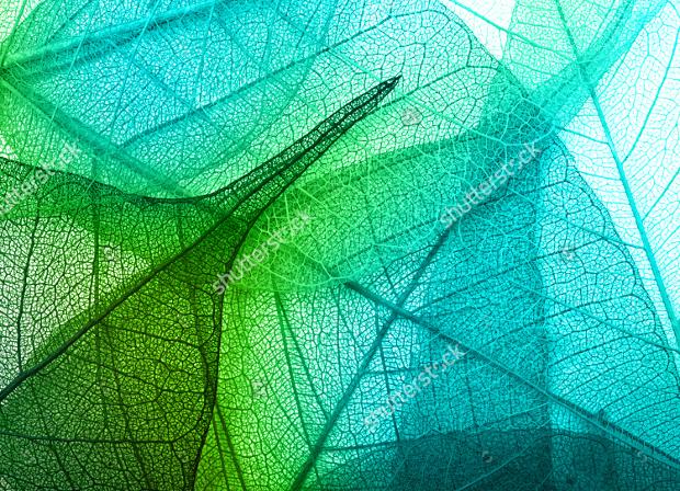 20+ Organic Textures - PSD, PNG, Vector EPS Format Download Design