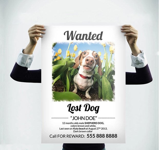 60+ Flyer Templates - Printable PSD, AI, Vector EPS Format Download - Lost Dog Flyer Examples