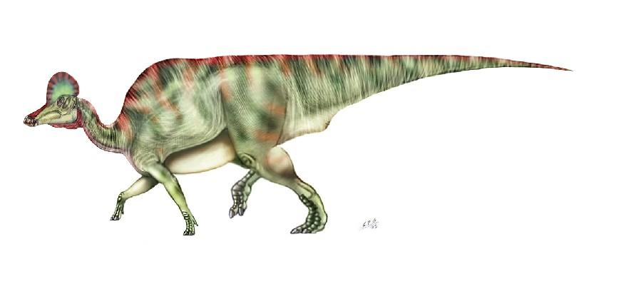 Dinosaur 3d Live Wallpaper Corythosaurus Pictures Amp Facts The Dinosaur Database