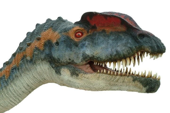 Skeleton Head Wallpaper 3d Dilophosaurus Pictures Amp Facts The Dinosaur Database