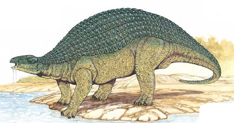 Animal Print Wallpaper Uk Nodosaurus Pictures Amp Facts The Dinosaur Database