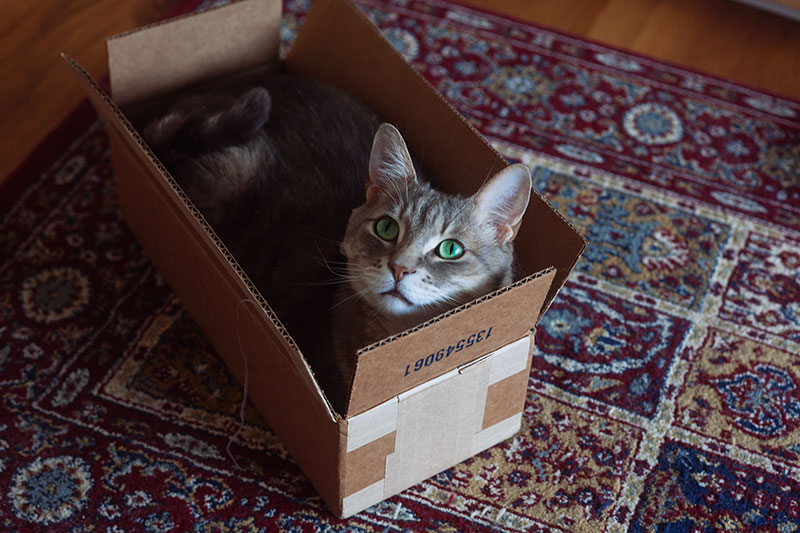 When Your Cat Finds The Perfect Sized Box
