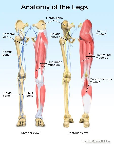 Leg Pain Symptoms, Treatments  Causes