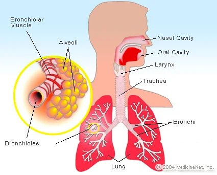 Upper Respiratory Infection Symptoms  Signs