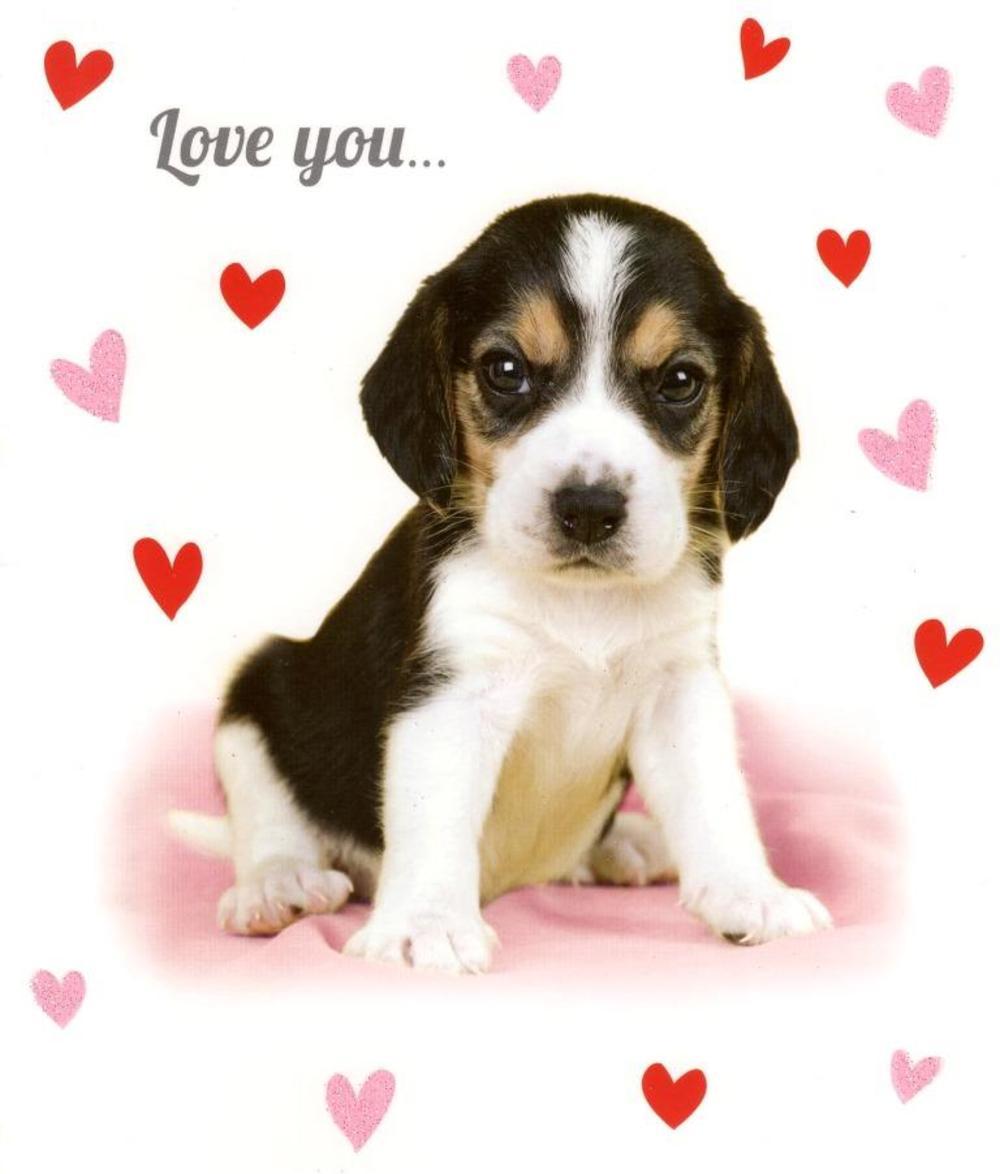 Cute Brand Wallpapers Love You Sooo Much Card Cute Puppy Valentine S Card
