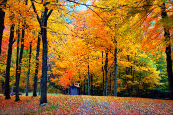 Mystical Creatures In The Fall Wallpaper Top 10 Autumn Foliage Destinations Essential Travel Magazine