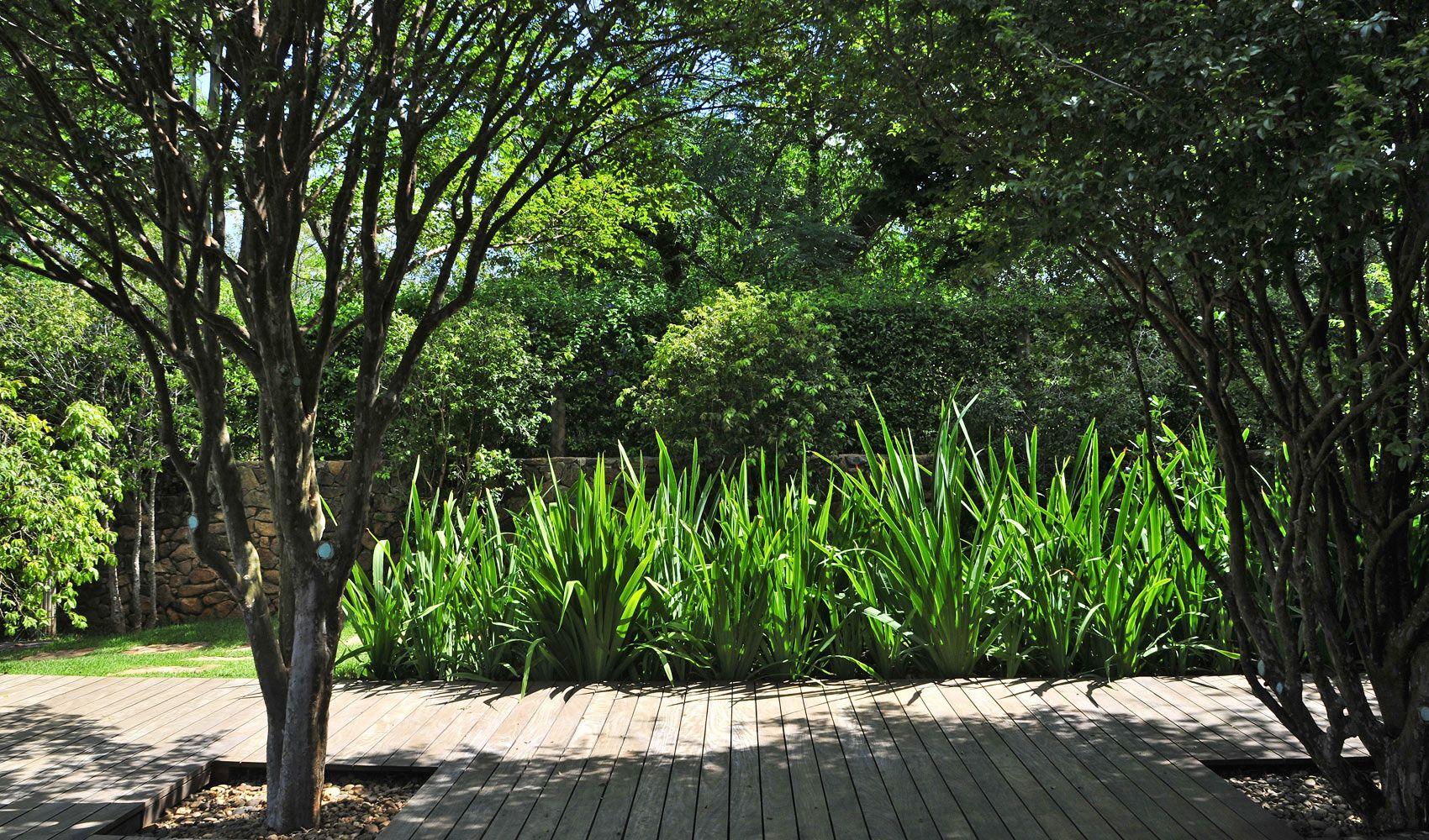 Dise o de exteriores jardines modernos y tropicales - Plantas tropicales de exterior ...