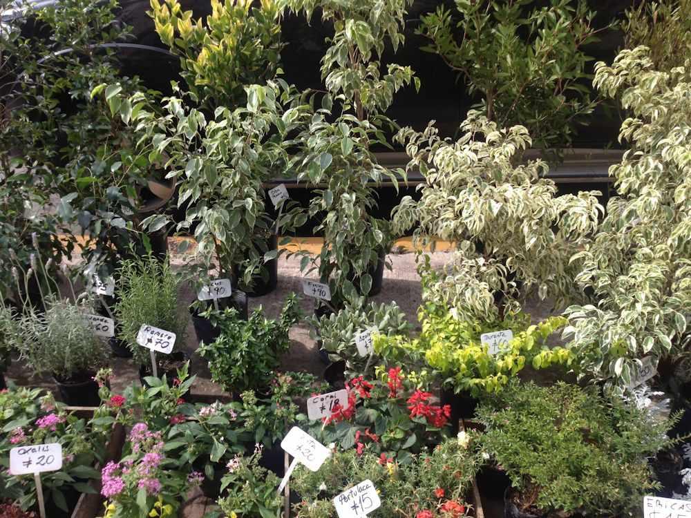 Viveros en palermo buenos aires for Vivero el botanico