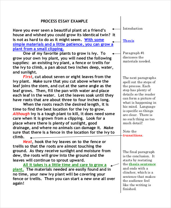23+ Free Essay Examples