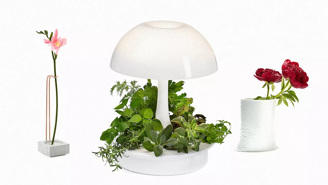 Lamp Plant 6 Ways To Make Your Indoor Plants Look Like Modern Art