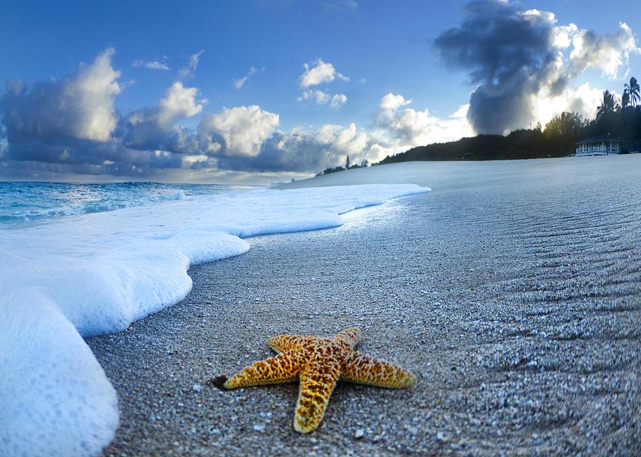 Ocean Waves Iphone Wallpaper Blue Foam Starfish Photograph By Sean Davey