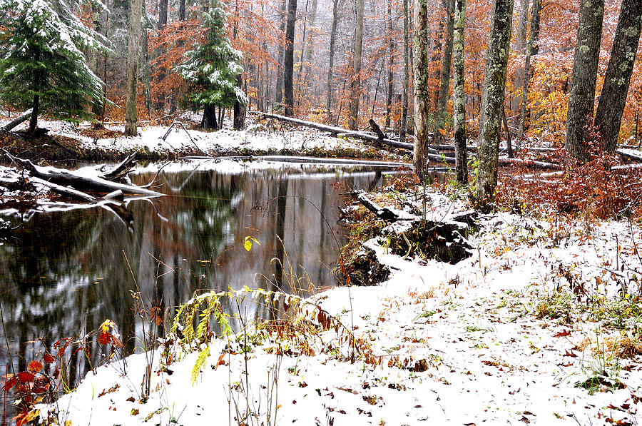 Iphone 5 Wallpaper Fall Autumn Snow Monongahela National Forest Photograph By