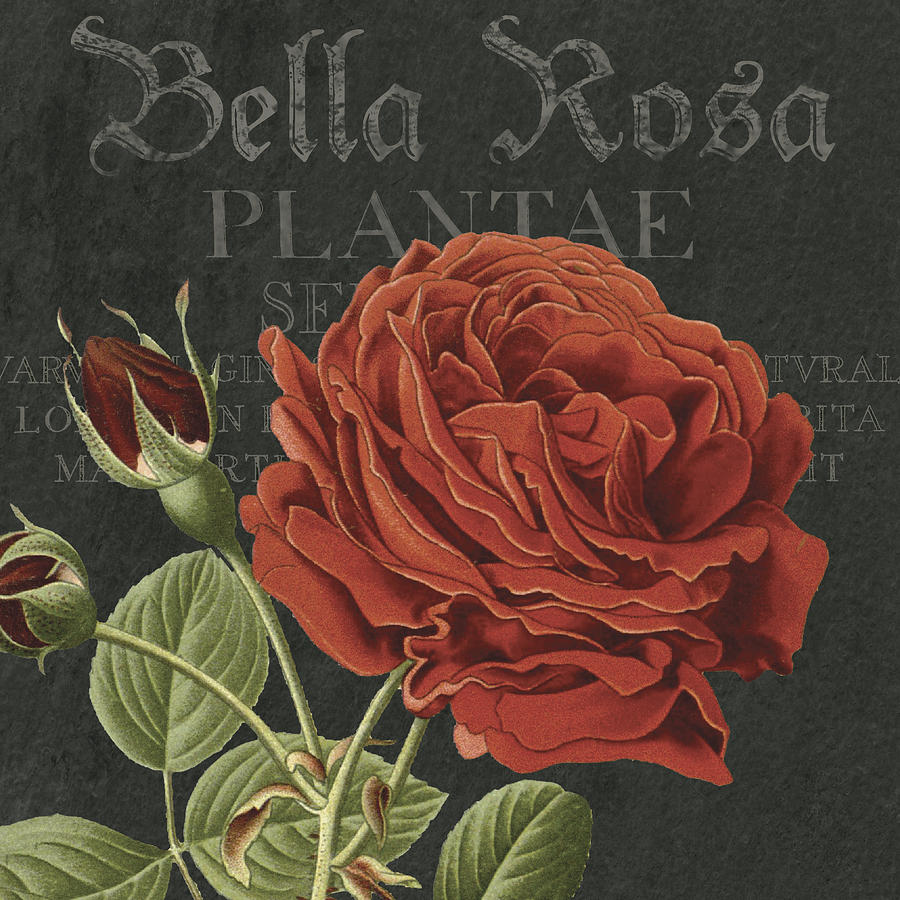 Bella Rosa Bella Rosa Square By Mgl Meiklejohn Graphics Licensing