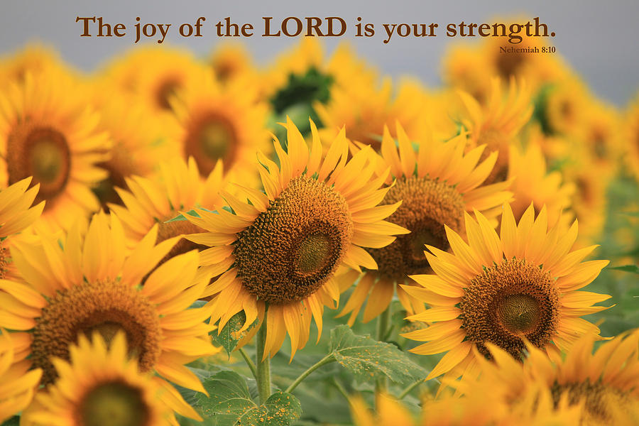 Scripture Quotes Desktop Wallpaper Christian Posters With Bible Verses Photograph By Raja Bandi