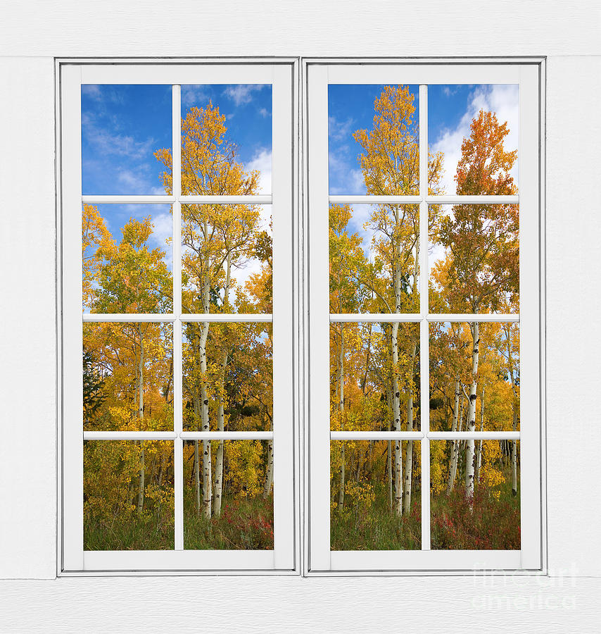 Fall Scenes For Ipad Wallpaper Autumn Aspen Forest White Window Frame View Photograph By