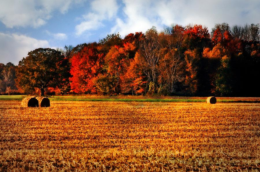 Fall Wallpaper Free Iphone Autumn Field Photograph By Cheryl Cencich