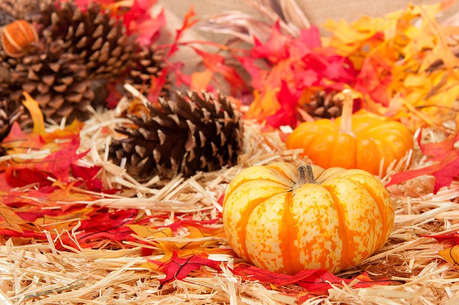 Free Computer Wallpaper Fall Leaves Autumn Theme And Pumpkin Photograph By Joe Belanger
