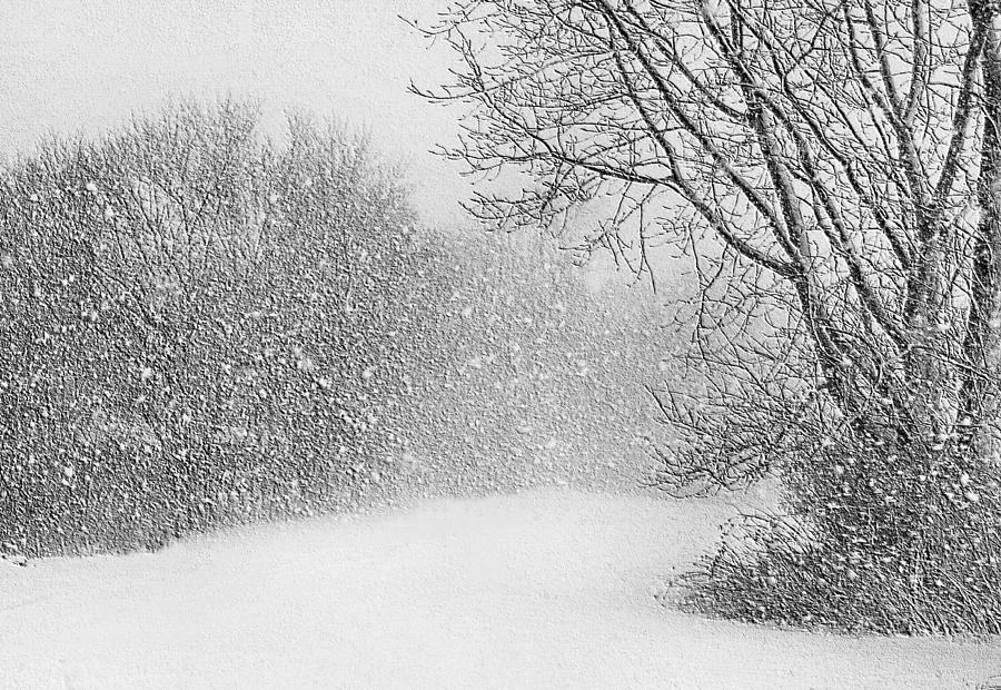 Iphone 5 Falling Snow Wallpaper Beautiful Blizzard Photograph By Kristin Elmquist