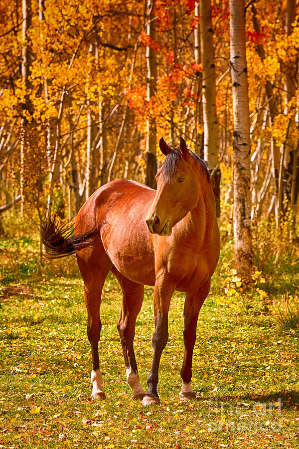 Fall Themed Iphone 6 Wallpaper Beautiful Horse In The Autumn Aspen Colors Photograph By