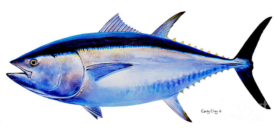 Iphone 7 Fish Wallpaper Hd Bluefin Tuna Painting By Carey Chen