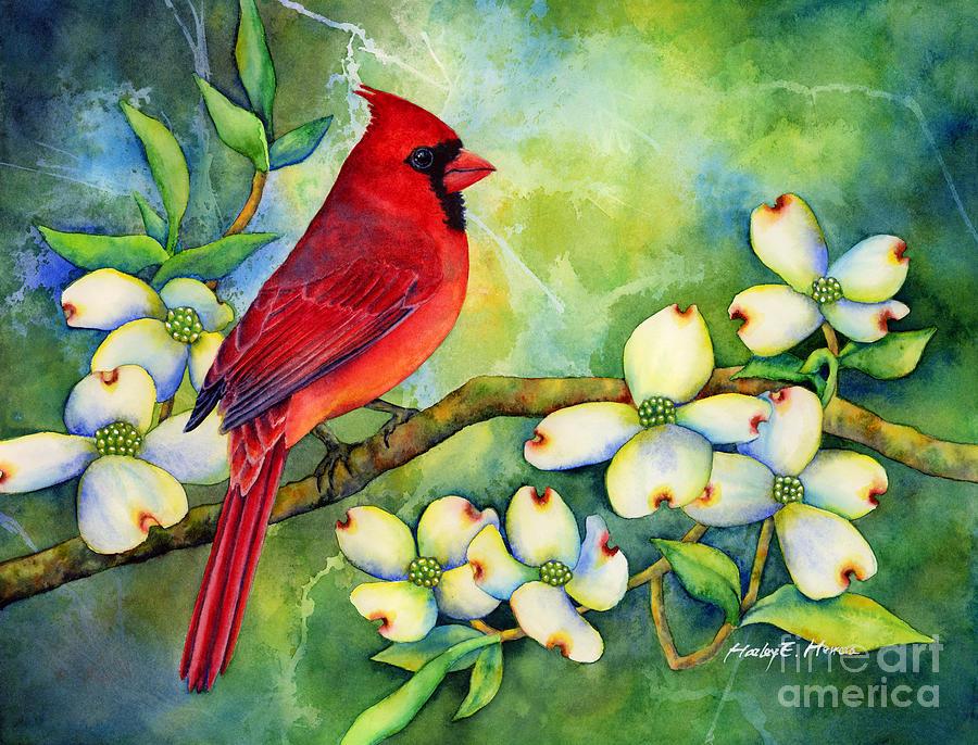 Fall Birch Tree Wallpaper Cardinal On Dogwood Painting By Hailey E Herrera