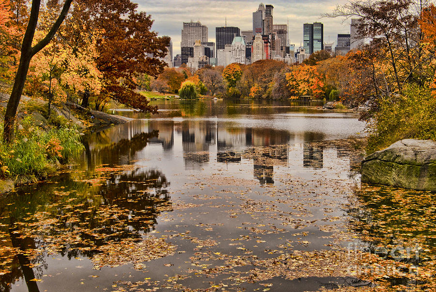 Fall Heart Leaves Background Wallpaper Central Park In The Fall New York City Photograph By