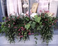 Charleston Romantic Floral Window Box Flowers Vintage ...