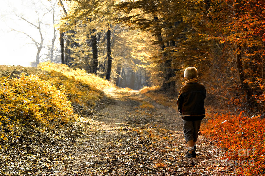 Fall Out Boy Wallpapers Iphone Child In Forest Photograph By Christophe Rolland