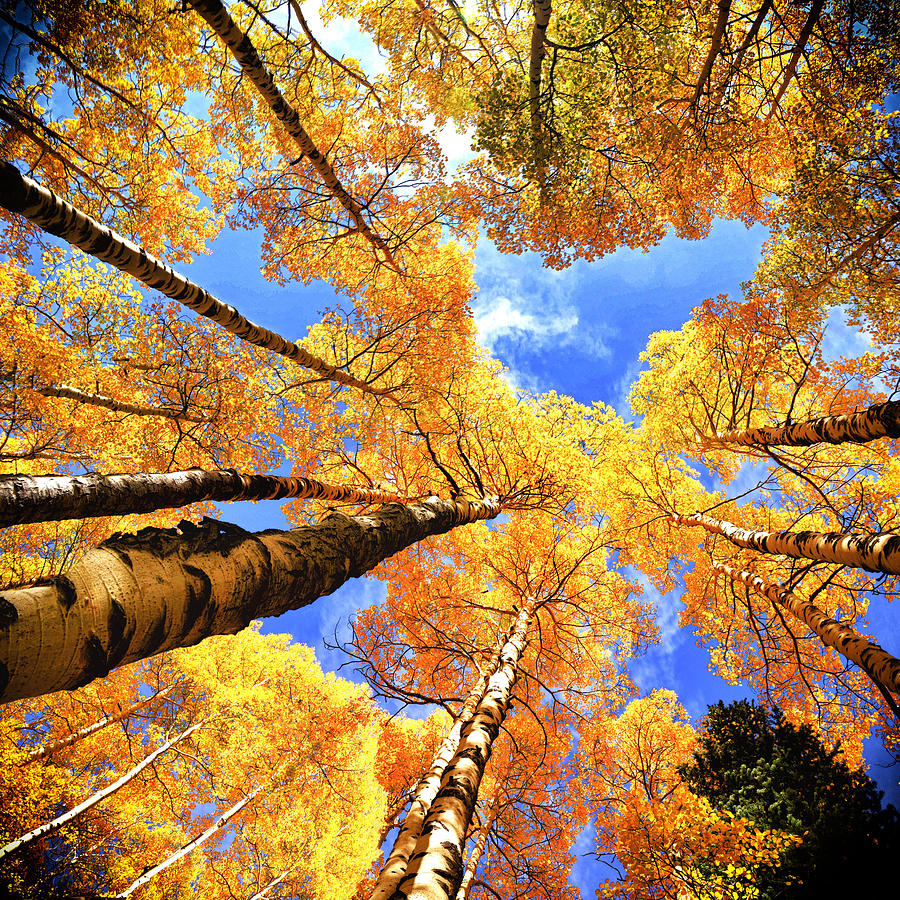 Fall Leaves Wallpaper For Ipad Colorado Autumn Sky Photograph By Olenaart Lena Owens