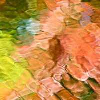 Coral Mosaic Abstract Square Photograph by Christina Rollo