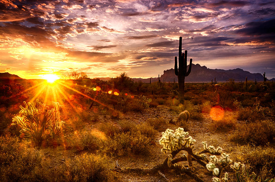 Create Your Own Iphone Wallpaper Online Desert Sunshine Photograph By Saija Lehtonen