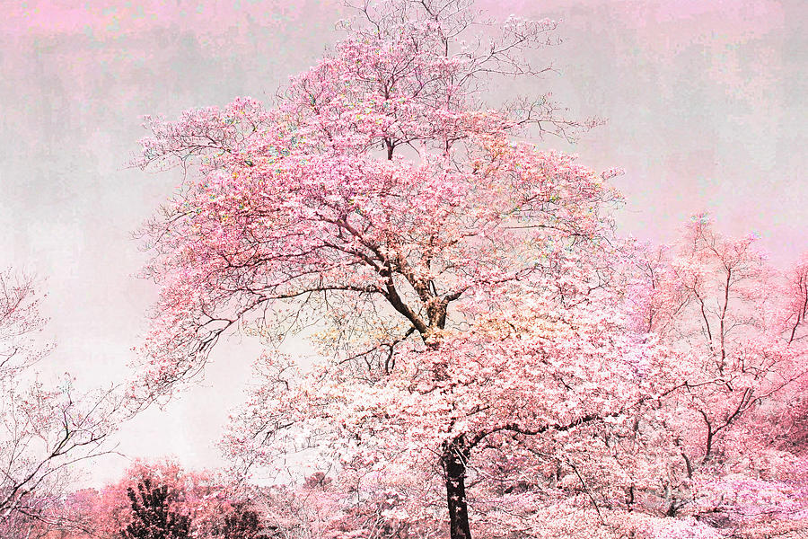 Quotes Wallpaper App Dreamy Pink Pastel Cottage Shabby Chic Nature Tree
