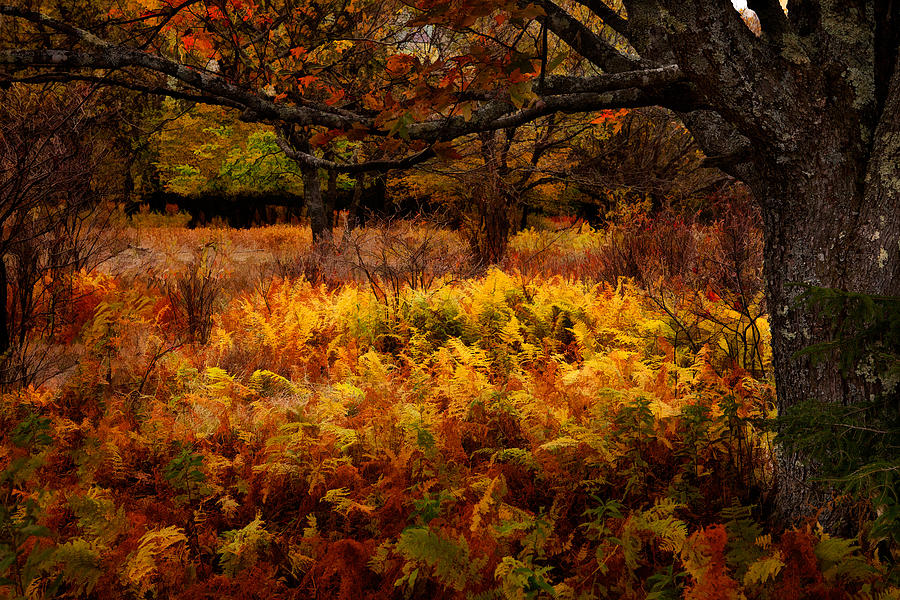 Free Desktop Wallpaper Fall Foliage Fall Shadows Dolly Sods West Virginia Painting By Dan