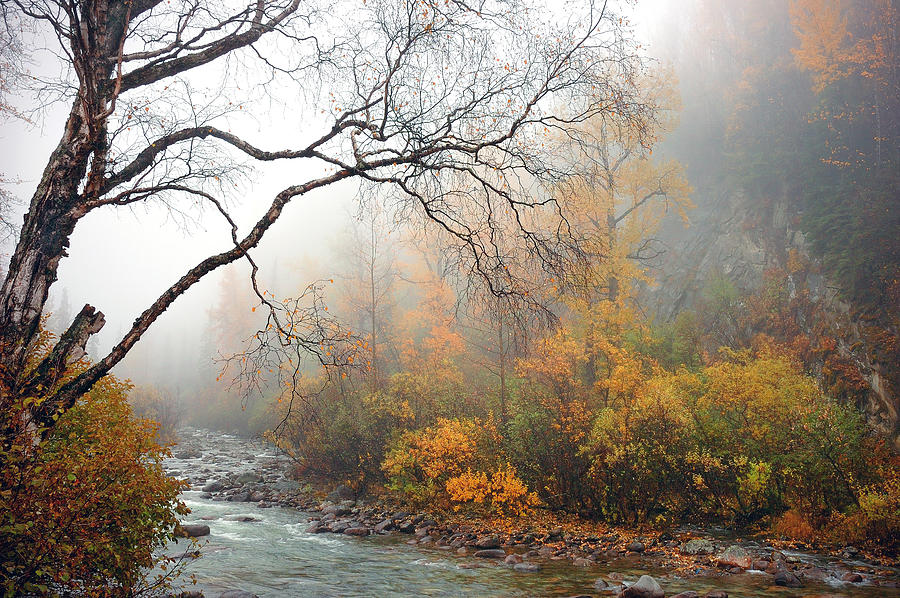 Wallpapers For Desktop Fall Colors Foggy Autumn Photograph By Ron Day