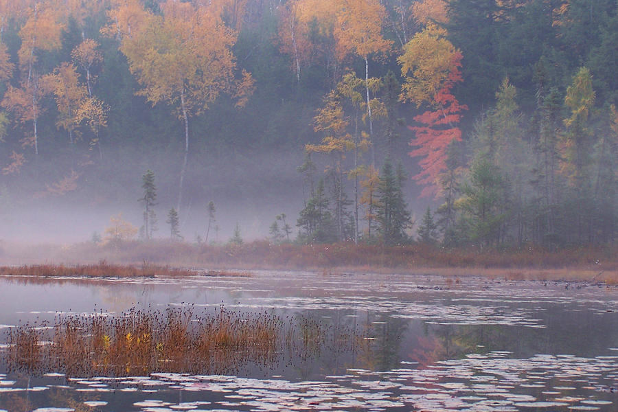 Fall With Water Wallpaper Foggy Fall Morning Photograph By Forest Floor Photography